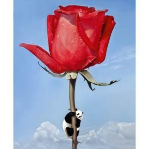 后天的玫瑰